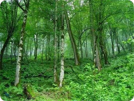 جنگل زیبای آمازون