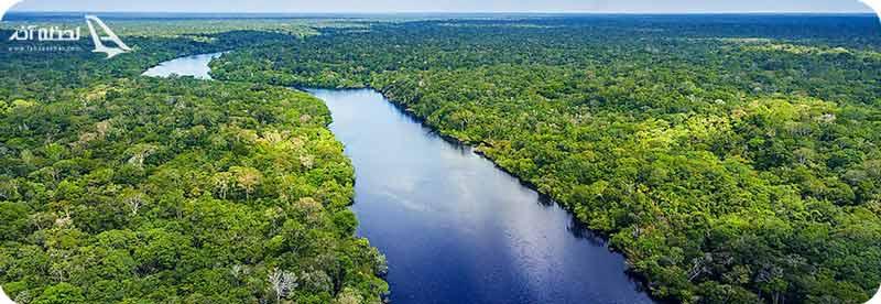 بزرگ ترین جنگل جهان