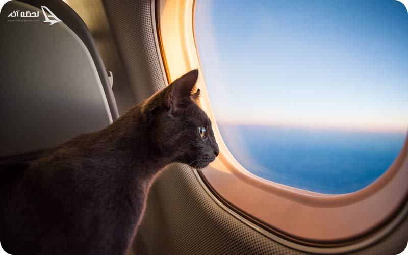 شرایط پذیرش حیوانات خانگی در هواپیما