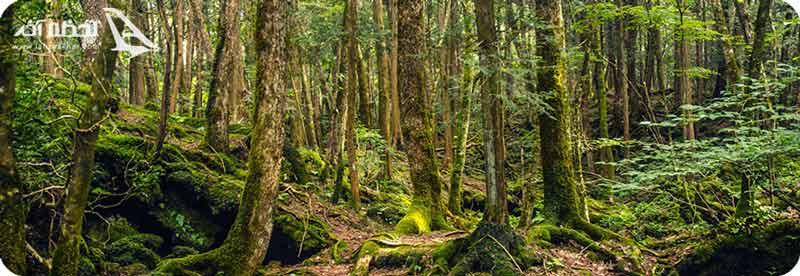 وحشتناک ترین جنگل های جهان
