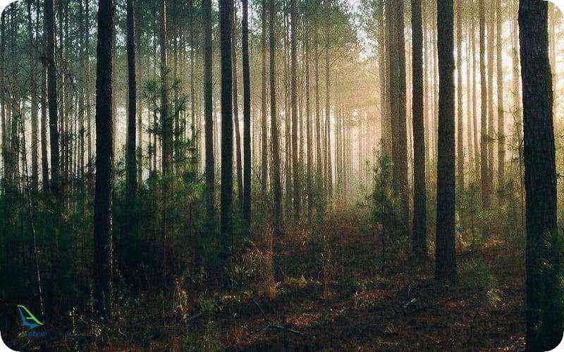ترسناک ترین جنگل ها