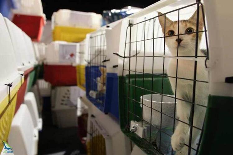 قوانین حمل حیوانات خانگی در ایرلاین های مختلف