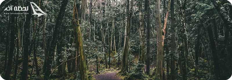 ترسناک ترین جنگل جهان