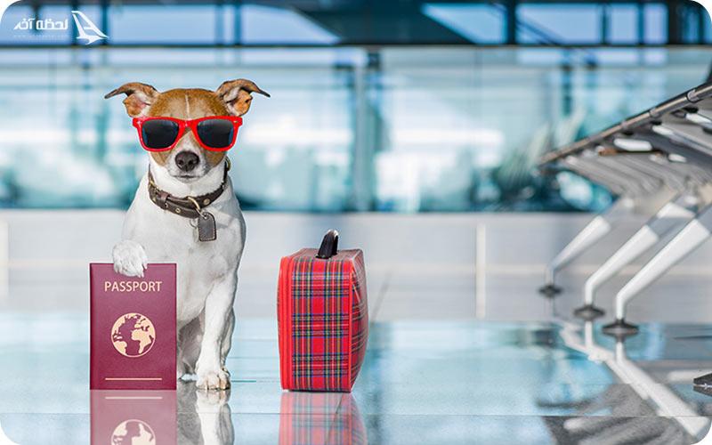 حیوان خانگی در هواپیما