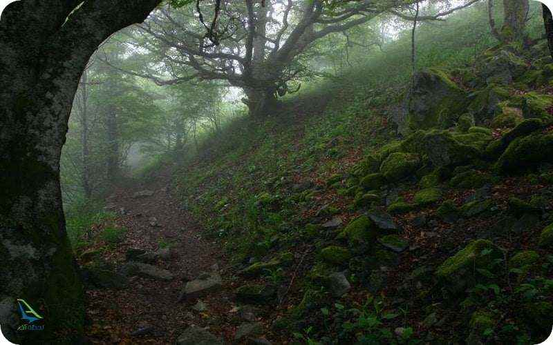 جنگل های ترسناک جهان