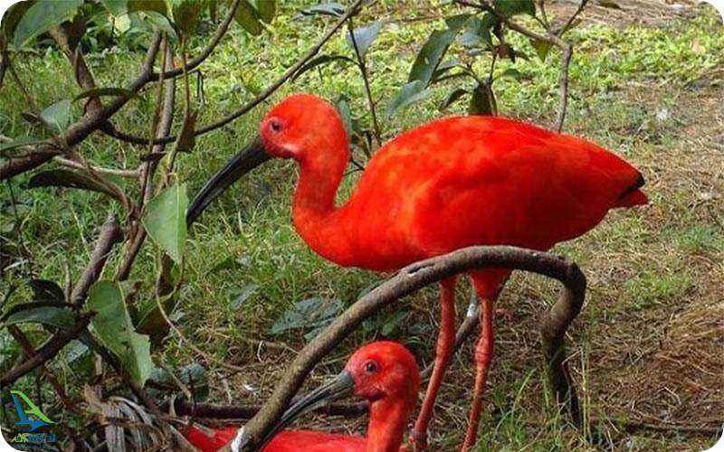 جنگل های آمازون