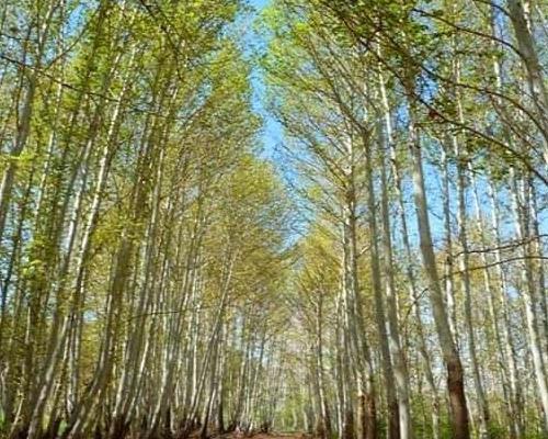 پارک جنگلی خجیر